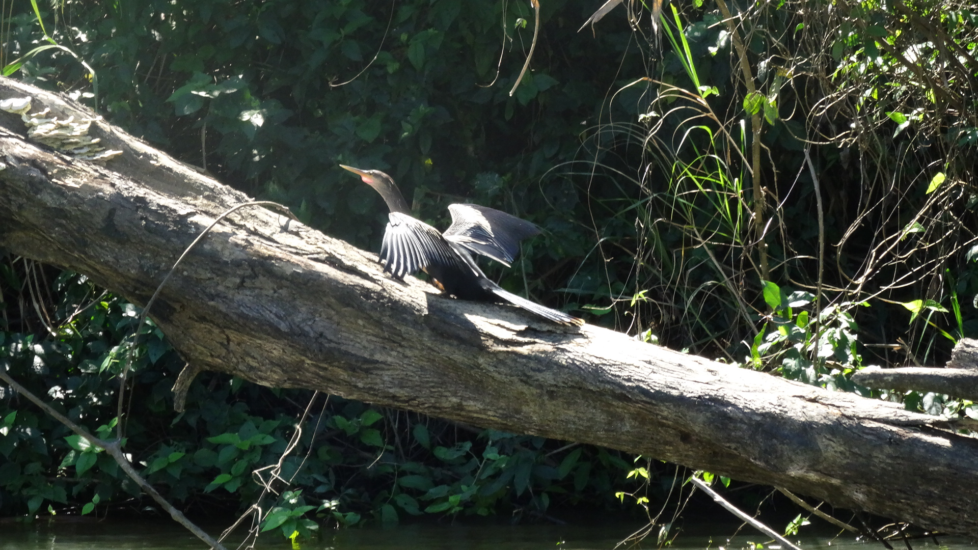A River Bird Sunbathes On A Tree Trunk