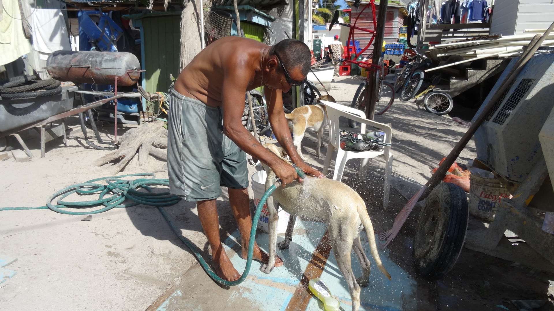 Animal Shelter Caye Caulker
