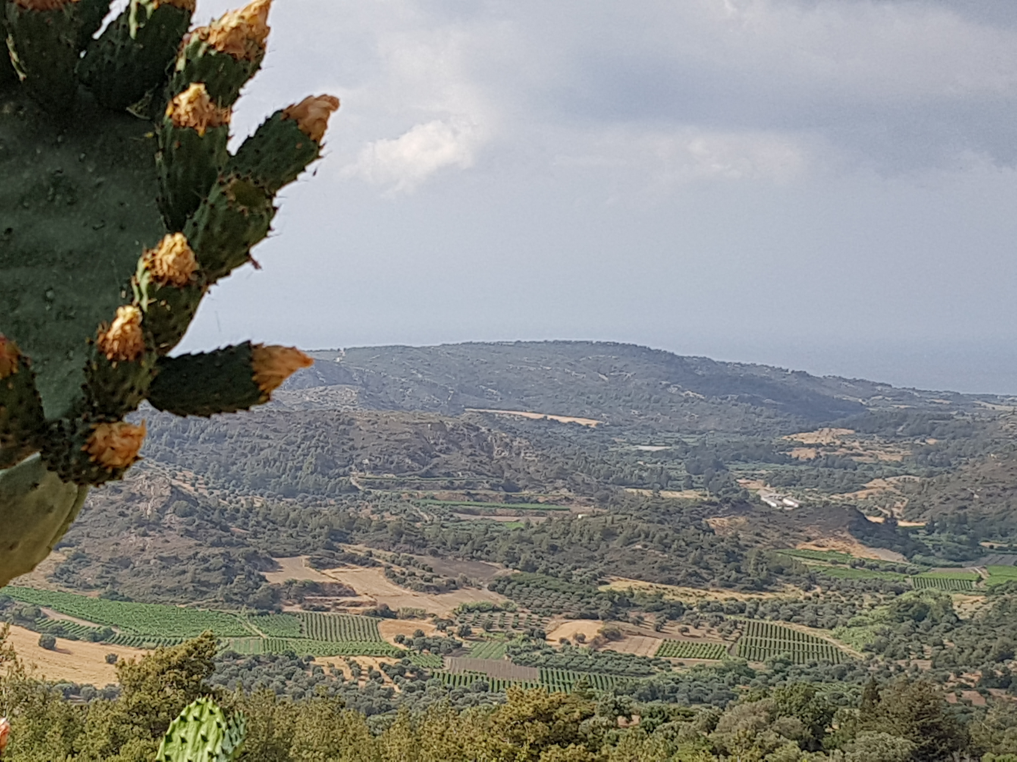 Olive Groves in Salakos